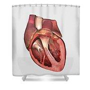 Heart Valves Showing Pulmonary Valve Shower Curtain
