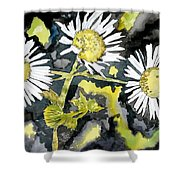 Heath Aster Flower Art Print Shower Curtain