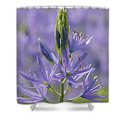 Heavenly Blue Camassia Shower Curtain