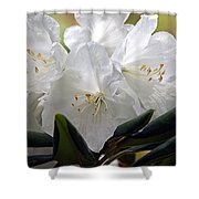 Heavenly Glimpse Shower Curtain