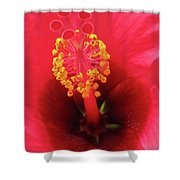 Heavenly Hibiscus 01 Shower Curtain