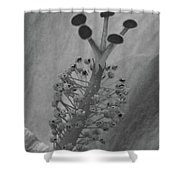 Heavenly Hibiscus Bw 13 Shower Curtain