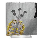 Heavenly Hibiscus Bw Yellow 12 Shower Curtain
