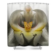 Heavenly Orchid Shower Curtain