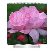 Heavenly Pink Rose Shower Curtain