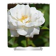 Heavenly White Rose Shower Curtain