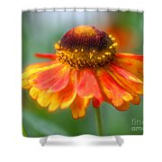 Heavenly Zinnia Shower Curtain