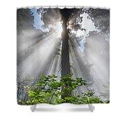 Heaven's Light Shower Curtain