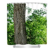Heaven's Tree - Color Version Shower Curtain