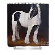 Heavy Stallion  Glin Fair Shower Curtain