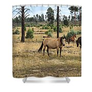 Heber Wild Horses 15 Shower Curtain