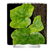 Hedera Shower Curtain