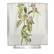 Hedge Calamint  Shower Curtain