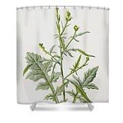 Hedge Mustard Shower Curtain
