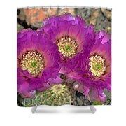 Hedgehog Cactus Triplets Shower Curtain