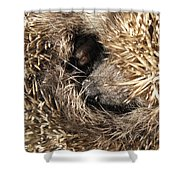 Hedgehog Curled Up Shower Curtain
