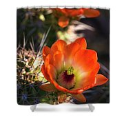 Hedgehog Flowers In Dawn's Early Light  Shower Curtain