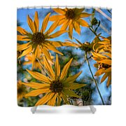 Helianthus Giganteus Shower Curtain
