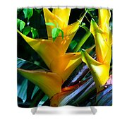 Heliconia Caribea Gold Shower Curtain