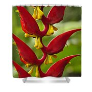 Heliconia Dielsiana Shower Curtain
