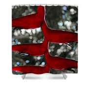 Heliconia Flowering Plant Shower Curtain