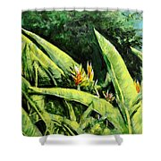 Heliconia Flowers 6 Shower Curtain