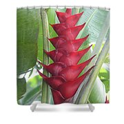Heliconia Hot Flash Shower Curtain