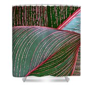 Heliconia Leaf Shower Curtain