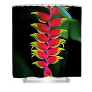 Heliconia Lobster Claw Shower Curtain
