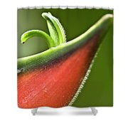 Heliconia Orthotricha Shower Curtain