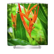 Heliconia Psittacorum Shower Curtain