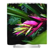 Heliconia Subulata - Wild Plant Series Shower Curtain