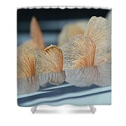 Helicopter Reflection Shower Curtain