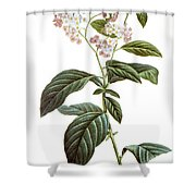 Heliotrope Shower Curtain