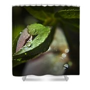 Helleborus Bud Shower Curtain