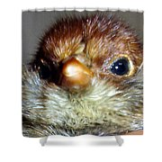 Hello Chick Shower Curtain