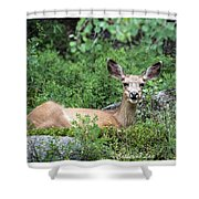 Hello From A Deer Shower Curtain