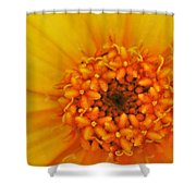 Hello Sunshine Shower Curtain