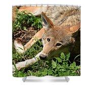 Hello Wolf Shower Curtain