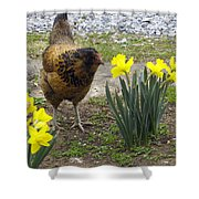 Hen And Daffodils Shower Curtain