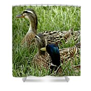 Hen Hen Drake At Frankenmuth On The Cass River Shower Curtain