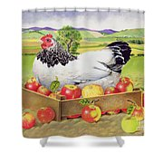 Hen In A Box Of Apples Shower Curtain by EB Watts
