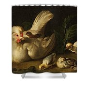 Hen With Chicks Shower Curtain