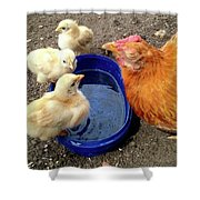 Hen With Her Yellow Chickens Shower Curtain