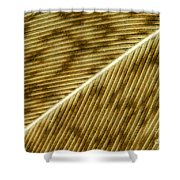 Hens Feather Shower Curtain