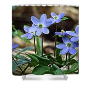 Hepatica Blue Shower Curtain by Lori Frisch