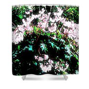 Her Diadem Shower Curtain by Eikoni Images