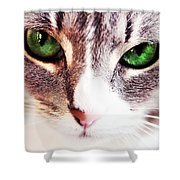 Her Emerald Eyes. Kitty Time Shower Curtain