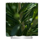 Herb #5 Shower Curtain