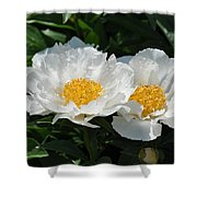 Herbaceous Peony 1 Shower Curtain